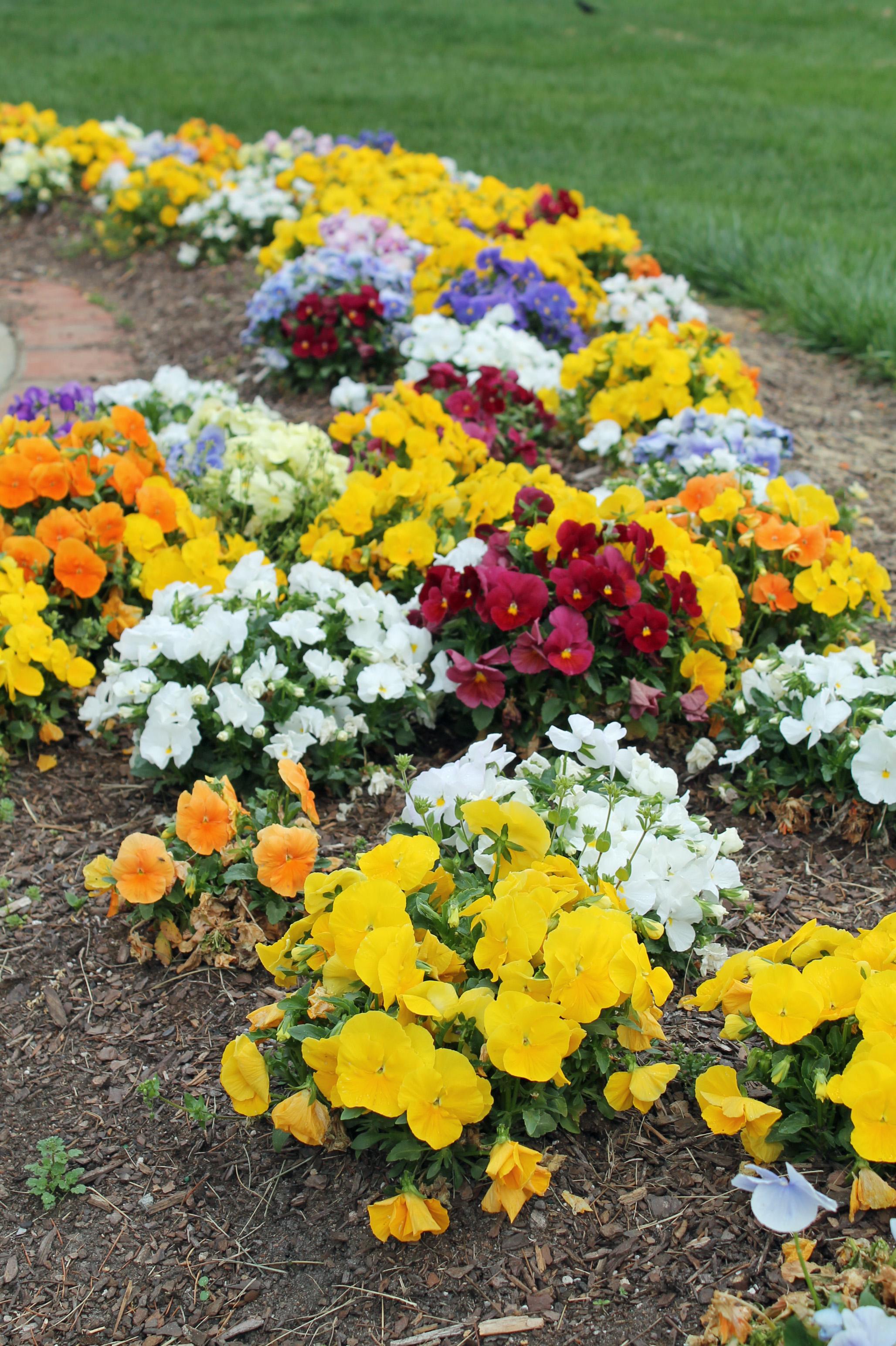 Bottom 10 Annual Flowers Garden Housecalls