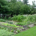 Grow Vegetables in the Shade? It's Possible…