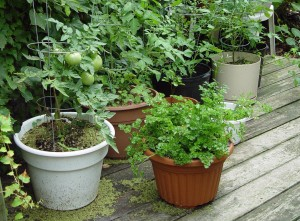 Try growing a few veggies in pots to gauge your light situation before digging a permanent garden.