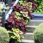 Containerscaping: Take Your Potted Plants to a New Level
