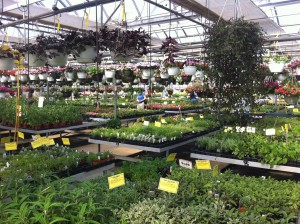 Inside Black Creek Greenhouse in East Earl... one of the stops on George's Plant Safari.