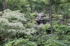 The Giles Rhododendron Garden was CMBG's first garden.