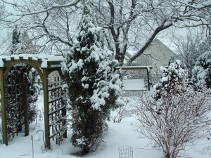 Part of George's snowy back yard.