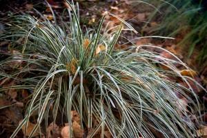 Credti: David Wilson/Garden Splendor Plants