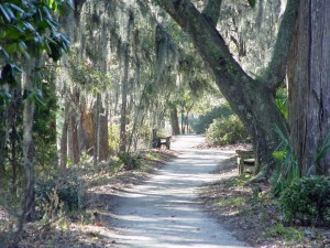 A path leading through moss-laden live oaks at Middleton Place.