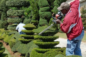Pearl Fryar at work on one of his topiaries.