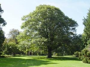 red.oak.habit
