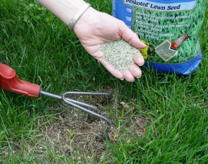 Fill in thin and bare patches with new grass seed to head off bare soil that weeds adore.