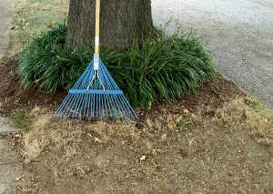 A leaf rake not only gets rid of leaves on the lawn, it's useful for other cleanup jobs and light soil-smoothing.