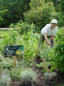Maryann Skubecz working in her pollinator friendly garden.