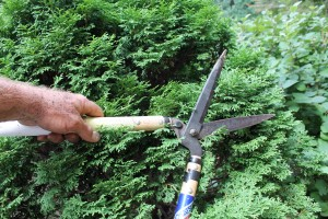 Shears are mainly useful for trimming hedges.