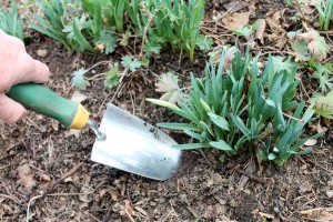 A sturdy trowel is the best tool for small digging and planting jobs.