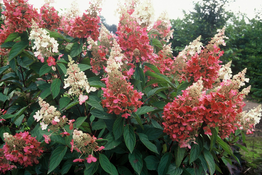 Top 10 Flowering Shrubs George Weigel