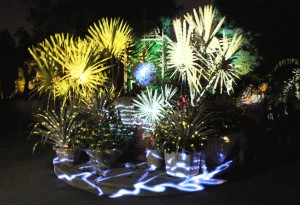 Fronds and foliage become projection screens in Longwood's Nightscape show.