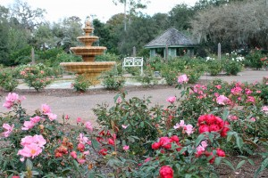 The rose garden at Orlando's Harry P. Leu Gardens in January.