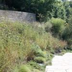 Pollinators and Native Plants