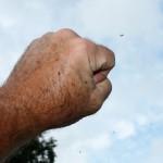 Black Flies Making Garden Life Miserable