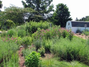 This is the Silvermans' meadow garden in summer.