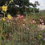 10 Top Gardening Trends of 2016