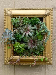 "An example of garden ""making"" -- this succulent frame by Sheri North of Linglestown."