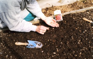One of my favorite days of every year is planting the early-spring vegetables.