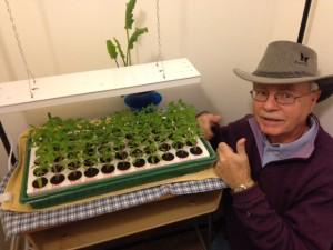 Joe Mateer nursing his 2016 tomato seedlings... so far blight-free (him and the tomatoes).