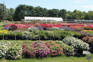 Penn State trials hundreds of varieties of plants every summer at its test plot in Lancaster County.