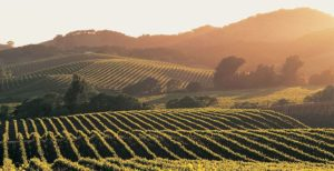 The Napa Valley vineyards are one of the stops on the 2017 California tour.
