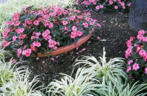 Buried pots help annuals avoid tree-root competition.