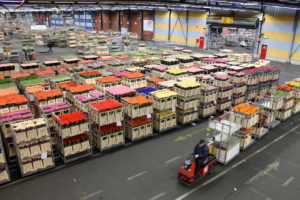 Huge quantities of cut flowers are sold every day through the Netherlands' giant Aalsmeer Flower Market.