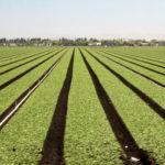 America's Vegetable Garden