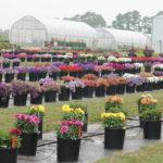 Have a Summer Garden Experience