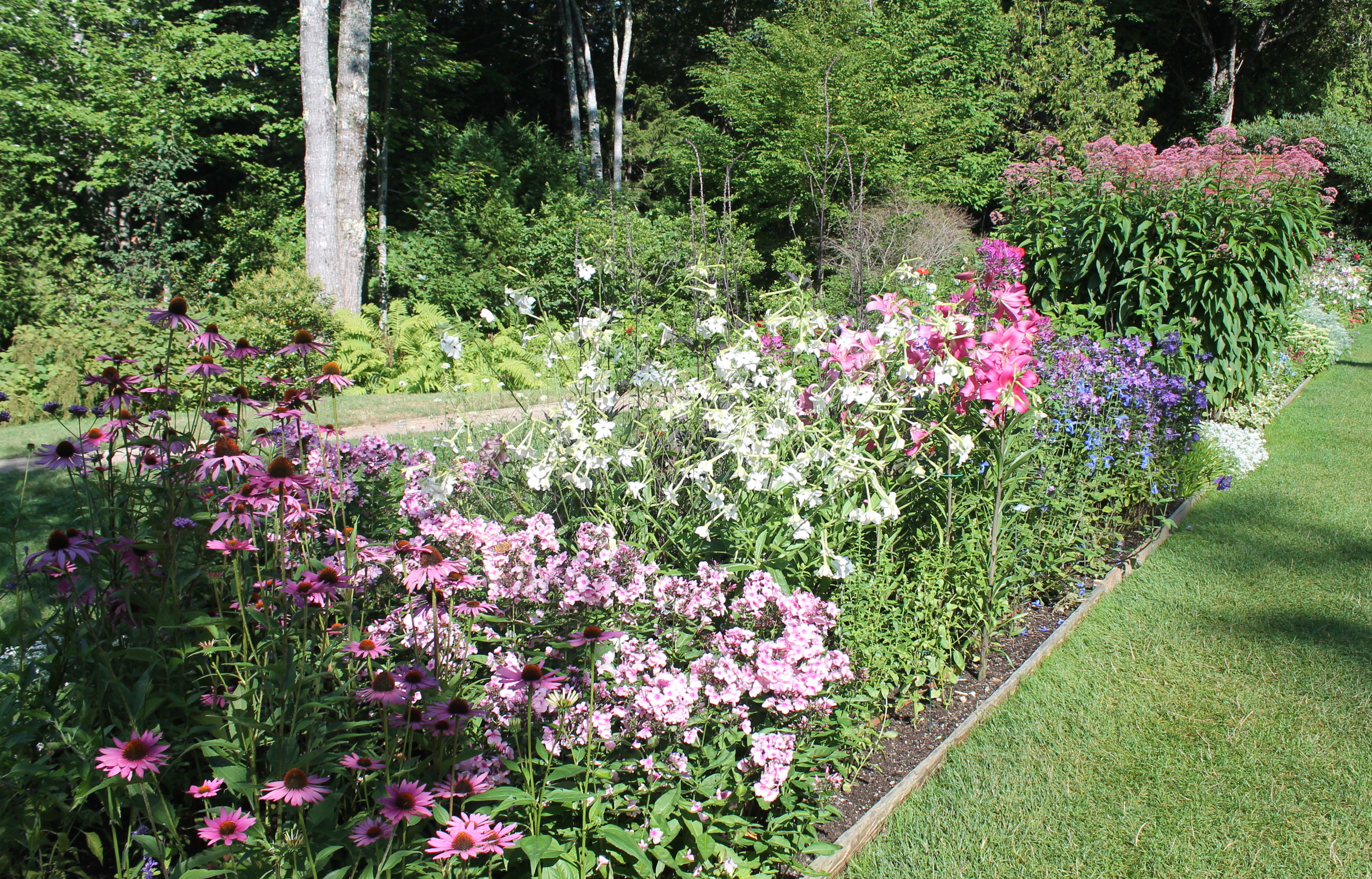 The Tricks To A Full Blooming Perennial Garden Garden Housecalls