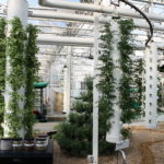 Where Edible Plants Grow Inside… Without Soil
