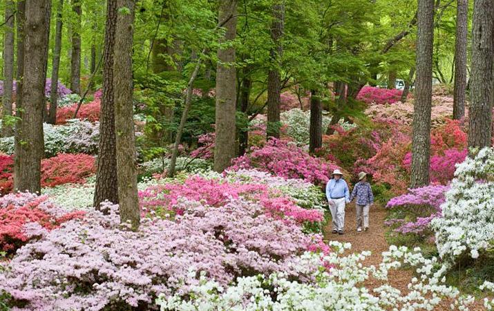Wash Away Winter With Blooming Azaleas Garden Housecalls