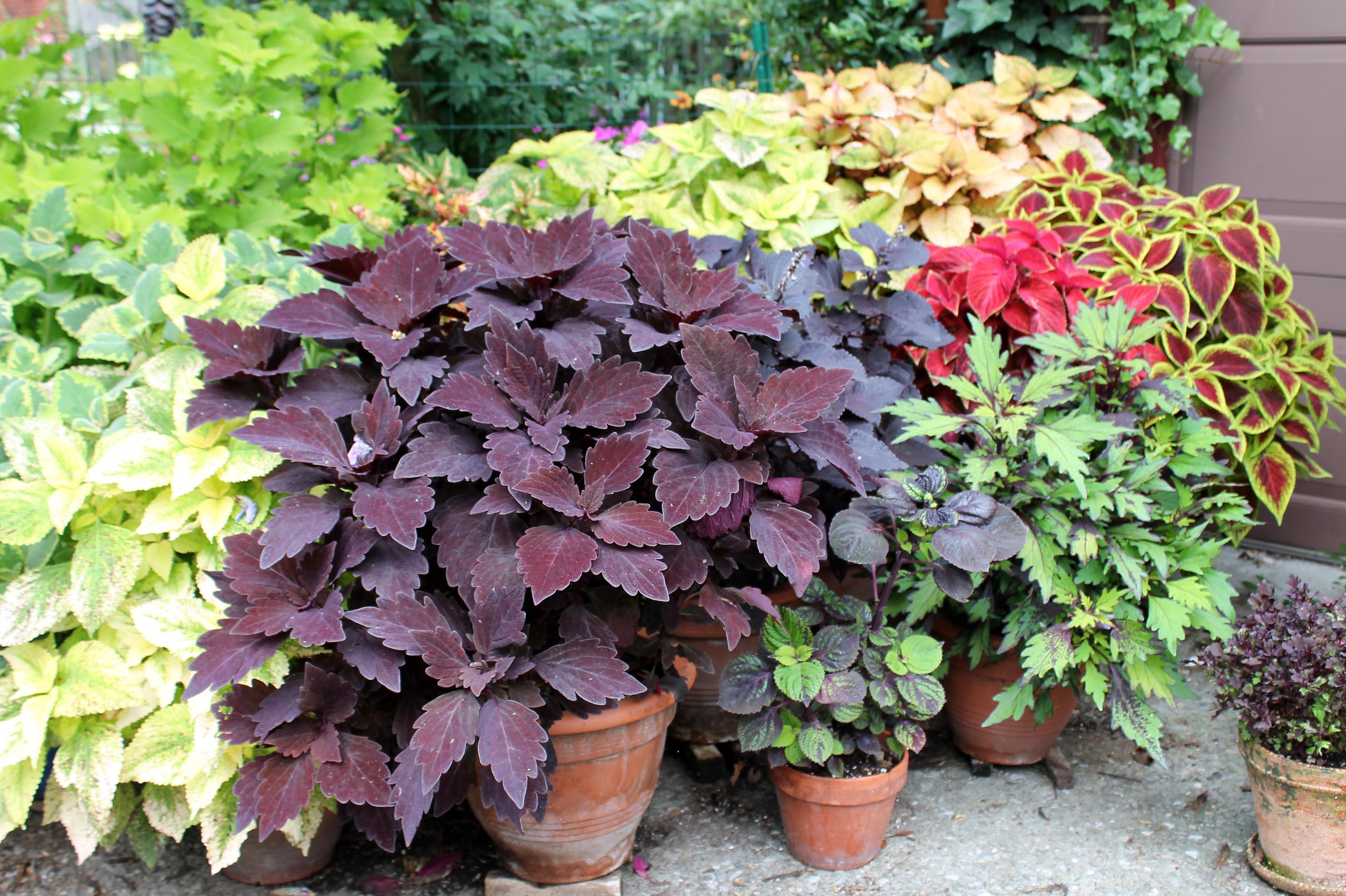 Mediterranean Gardens For Pennsylvania George Weigel